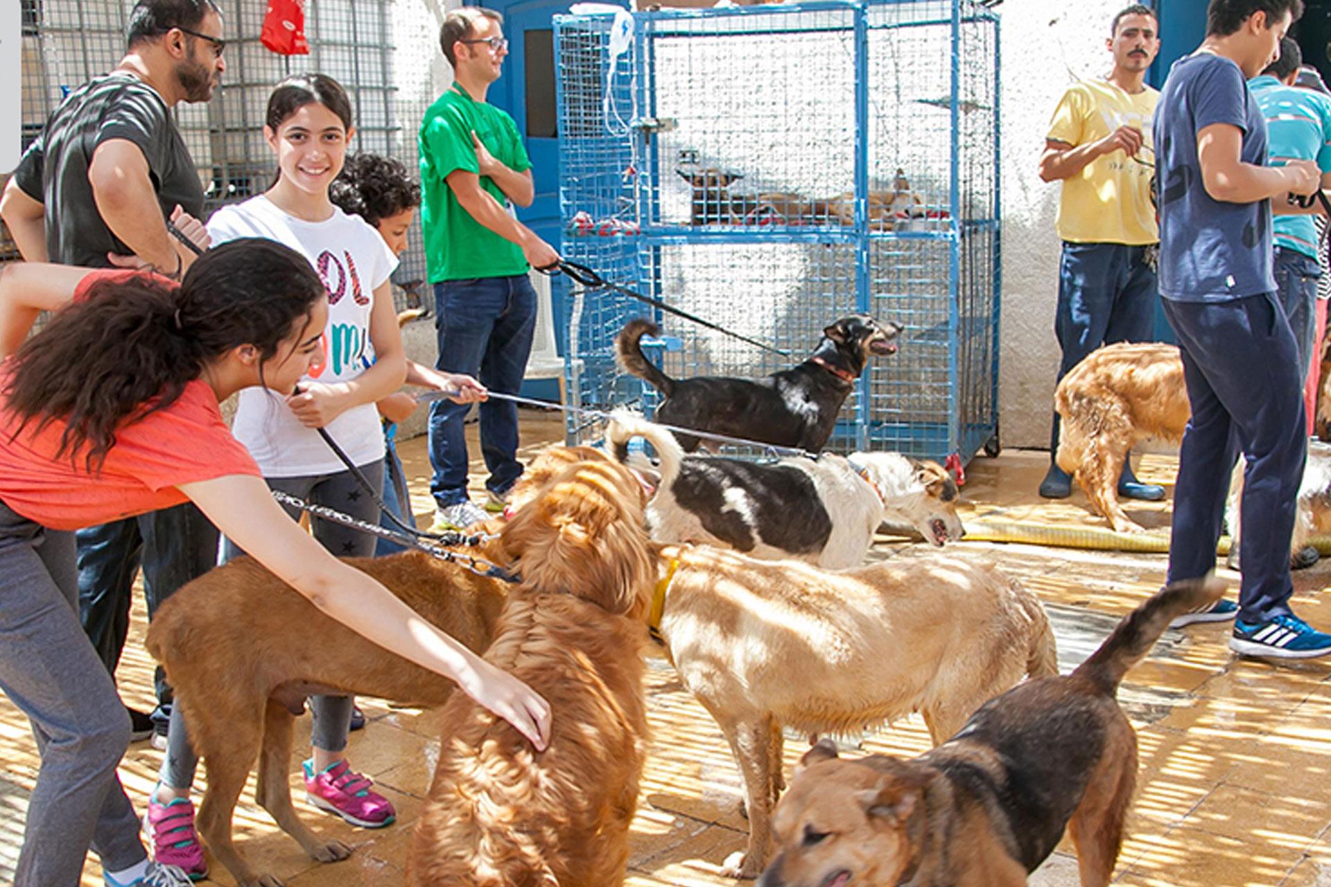 ESMA Animal Shelter Trip 2018